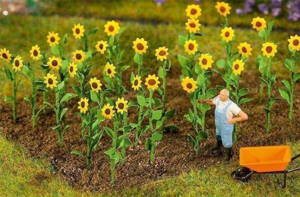 16 Sonnenblumen