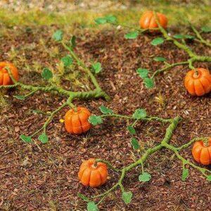 6 Kürbispflanzen