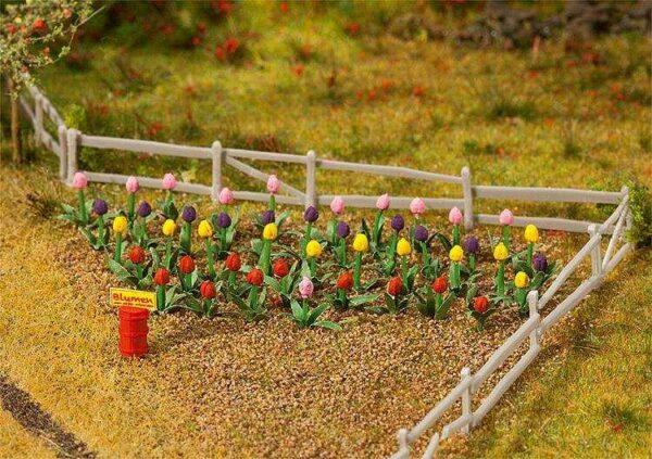 36 Tulpen