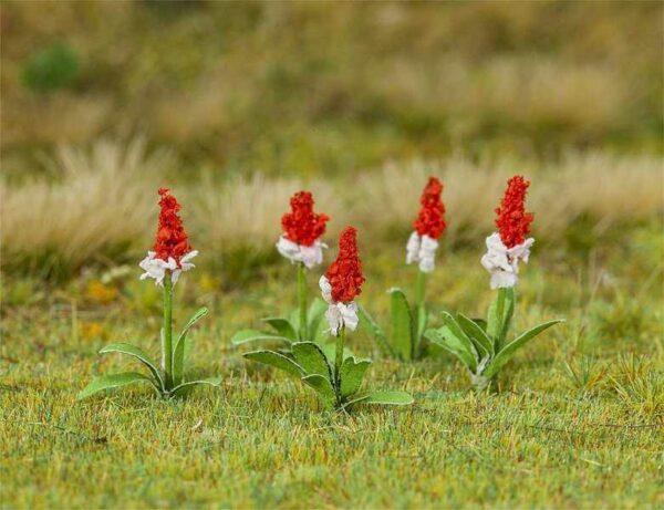 32 Orchideenprimel