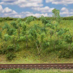 Waldrandbäume/-sträucher