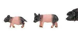 6 Schwäbisch-Hällische Landschweine